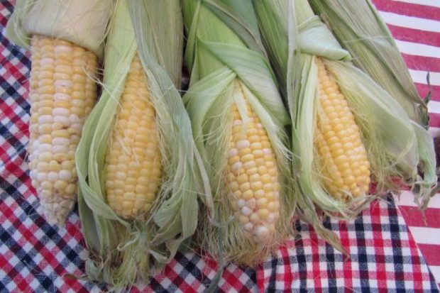 Fresh ears of corn from Luckett Farms. Photo by Lauren De Witt.